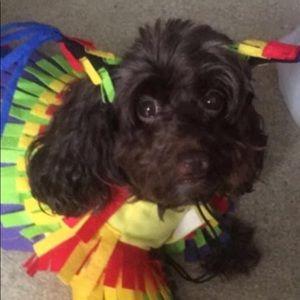 Size M Piñata Dog Halloween Costume
